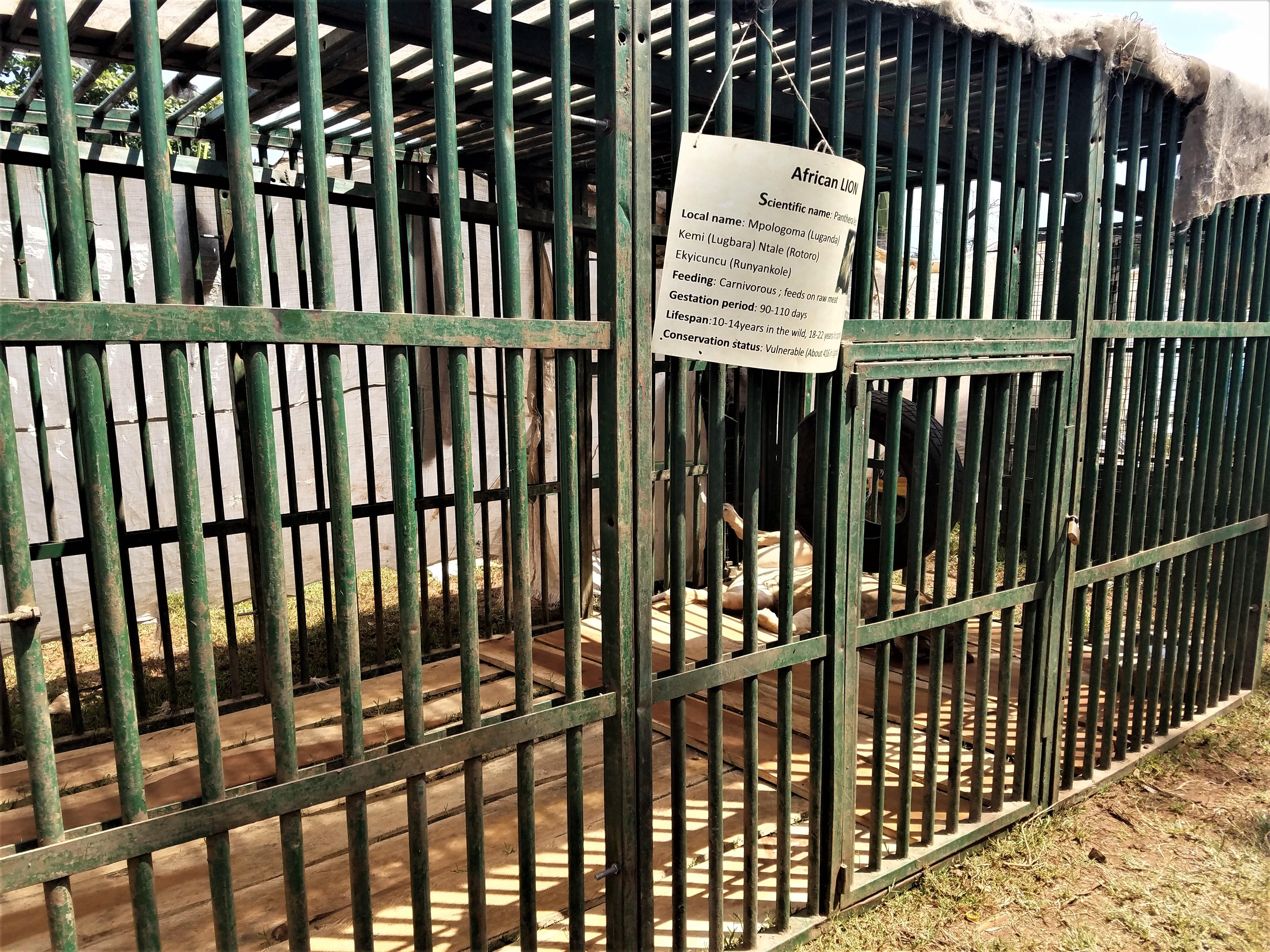 Jinja, Uganda, East Africa, Lioness, Zoo