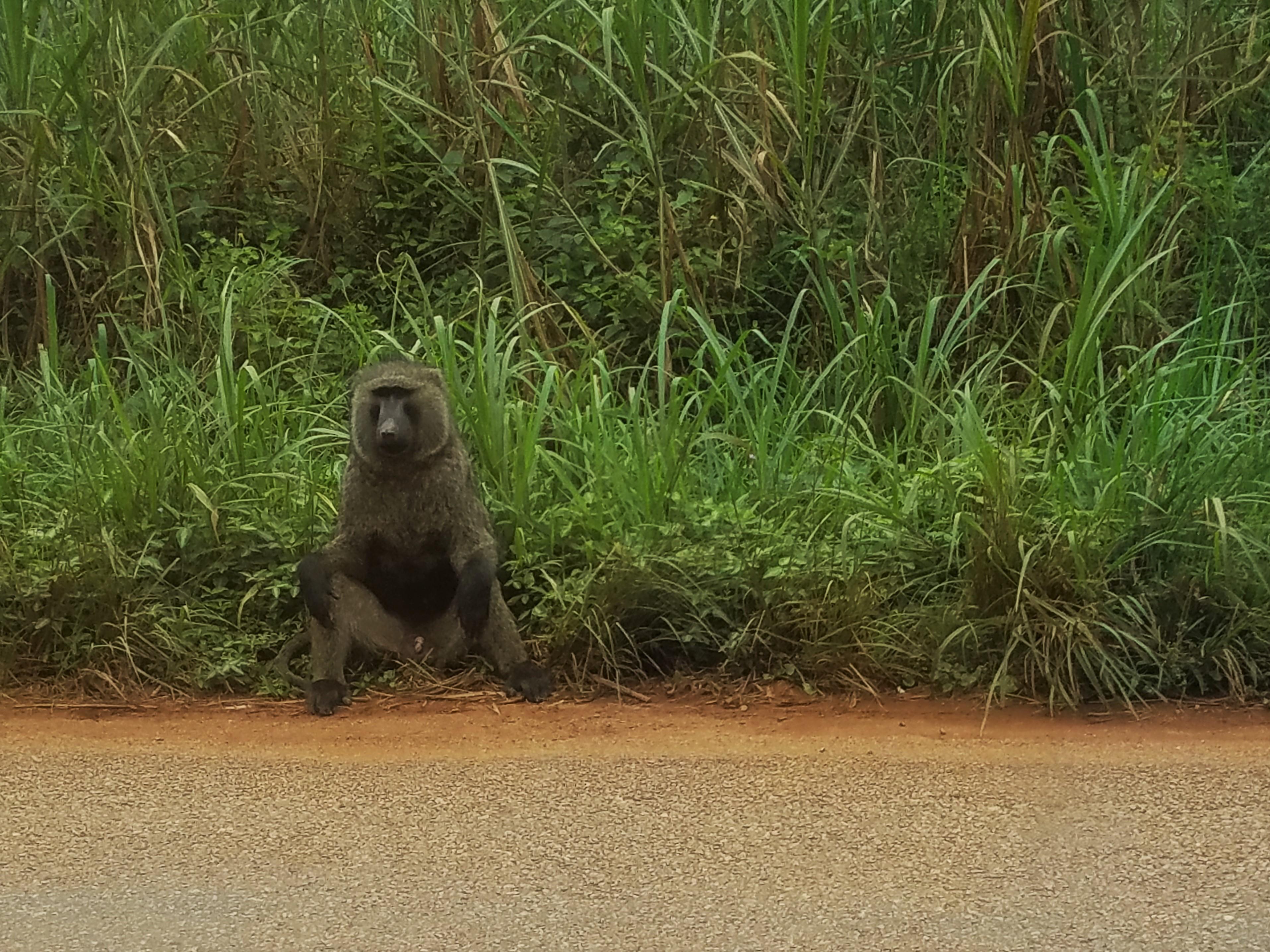 Ape, Uganda, Red Chili