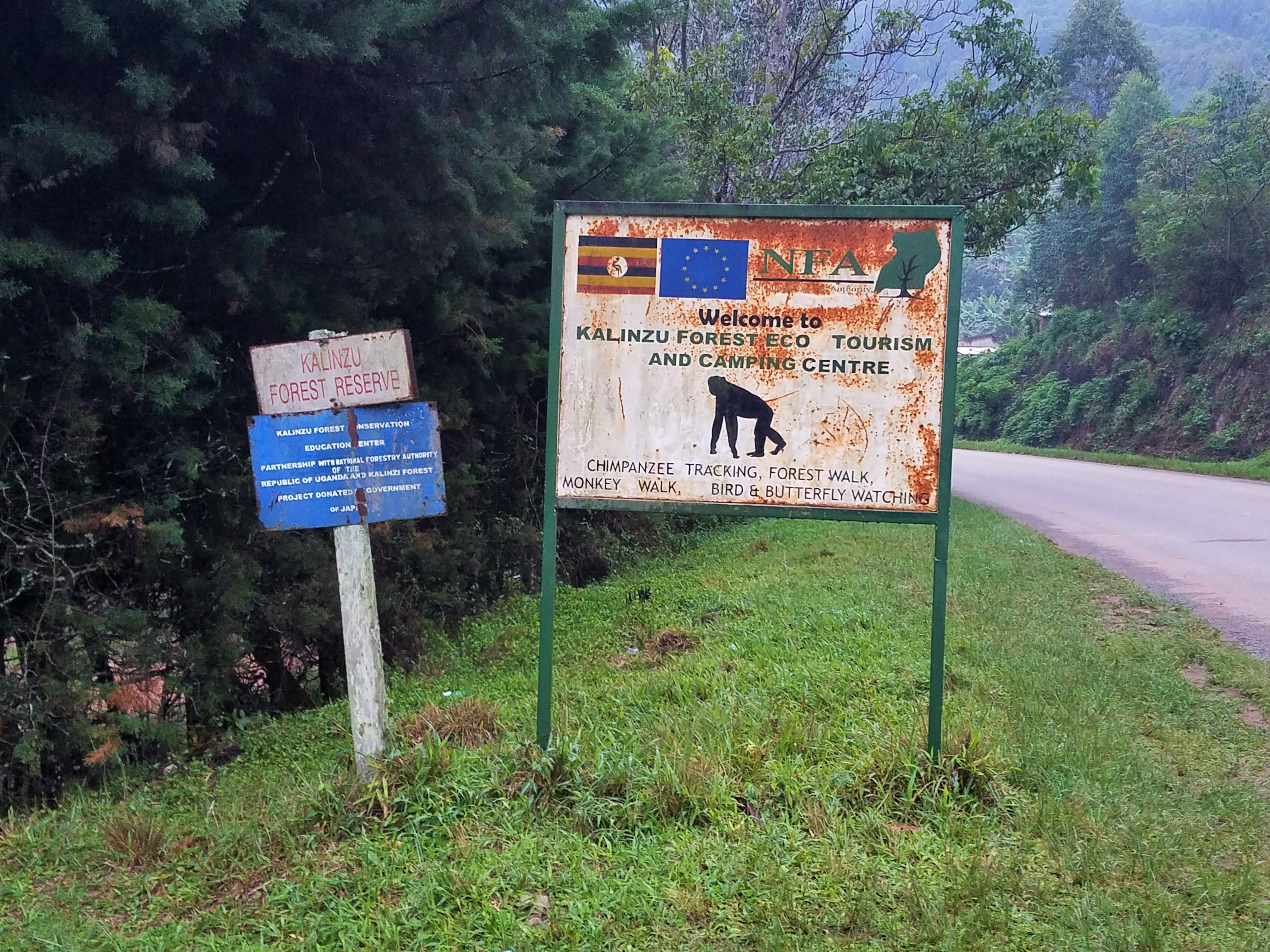 safari, Uganda, Red Chili, Chimp Tracking, Kalinzu Forrest, eco-tourism