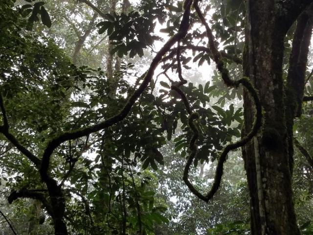 safari, Uganda, Red Chili, Chimp Tracking, Kalinzu Forrest, eco-tourism, rainforest